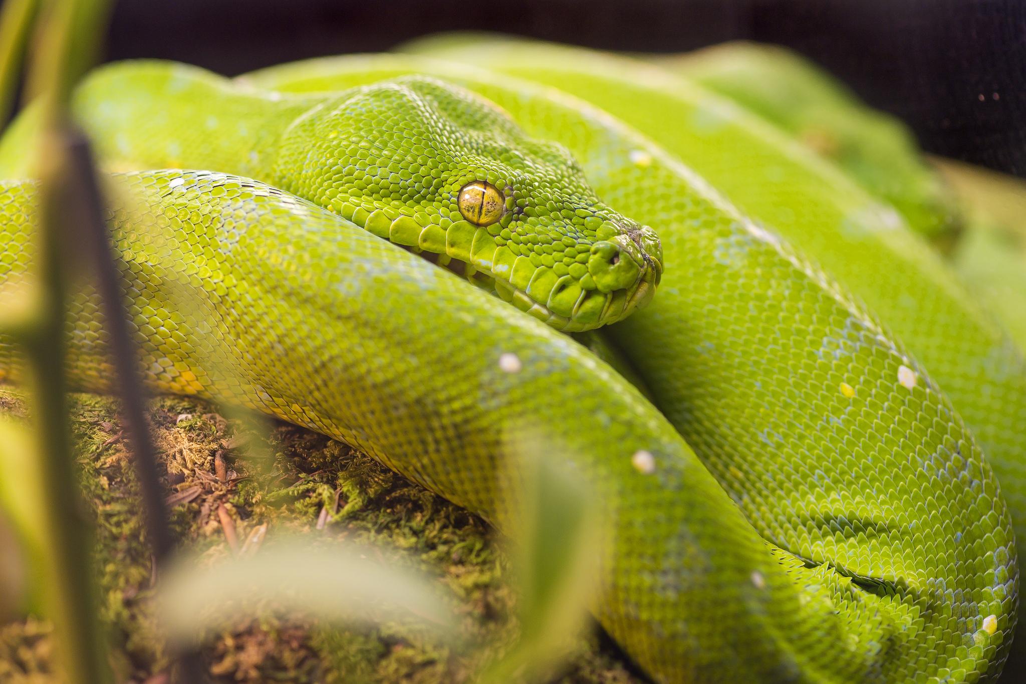 Python, un langage en demi teinte